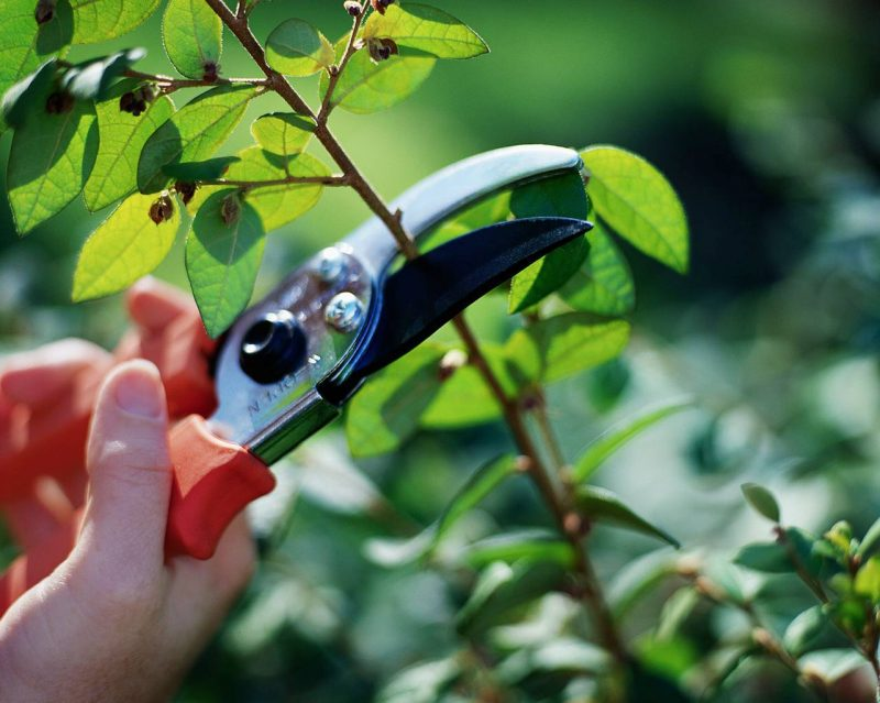 Tips on Pruning Plants