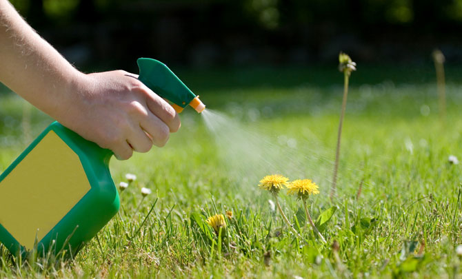 7 Household Products That Kill And Control Weeds
