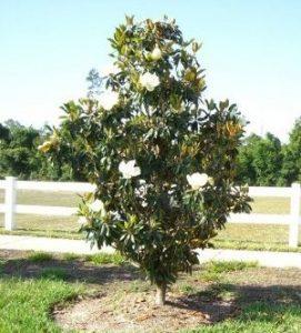 Fire Retardant Trees And Plants Jimsmowingcomau