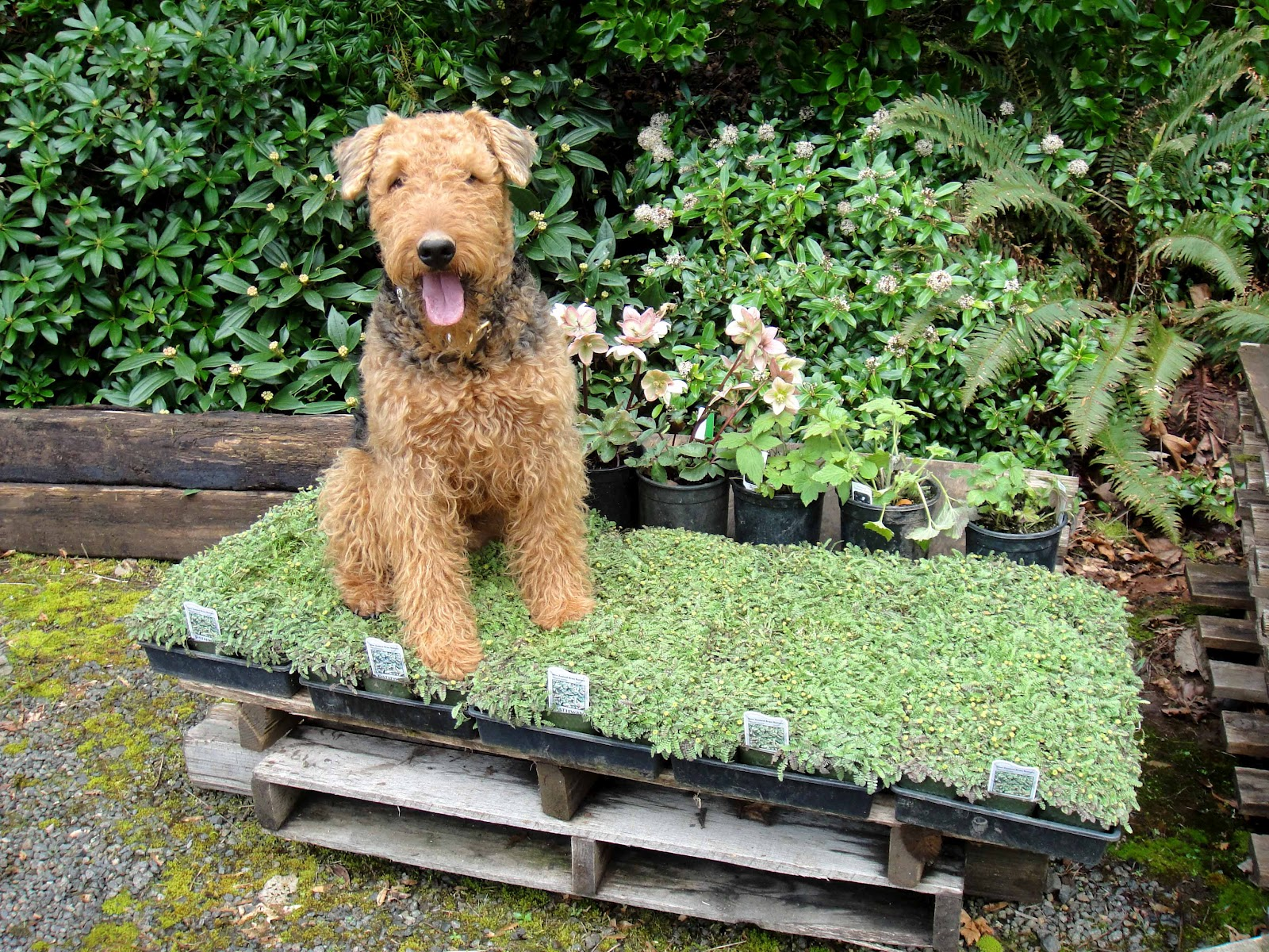 Pet friendly garden design ideas for Garden designs for dogs