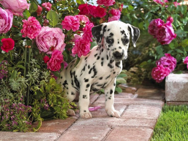 Enhance Your Property by Creating a Pet Haven