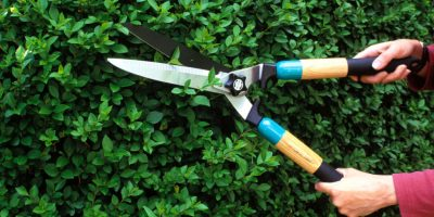 Important Tips on Pruning Plants