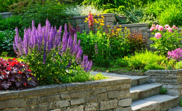 Adding a Splash of Colour to Your Garden