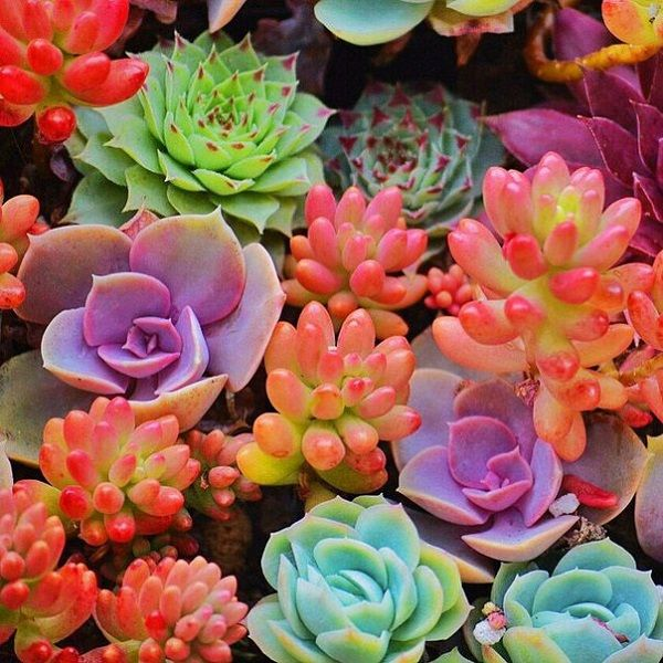 A Guide To Succulent Plant Care