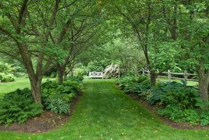 5 Trees for Garden Shade