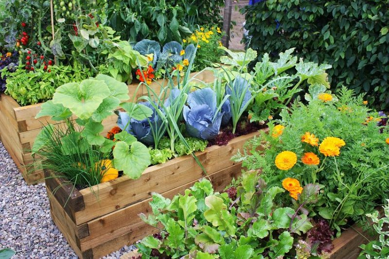 Creating A Kitchen Garden