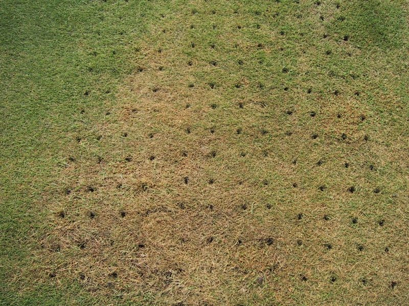 What are the Benefits of Aerating Your Lawn in Winter?