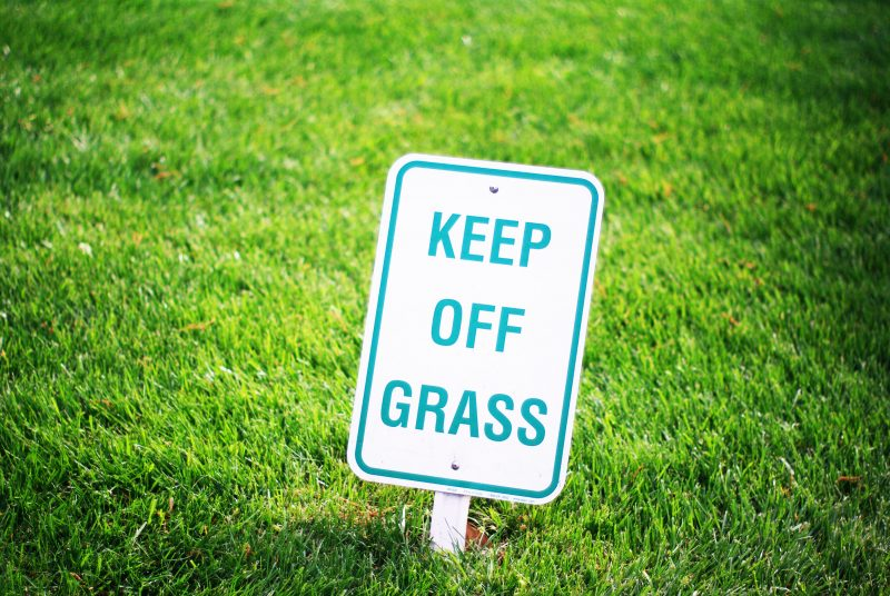 Identifying Different Lawn Diseases