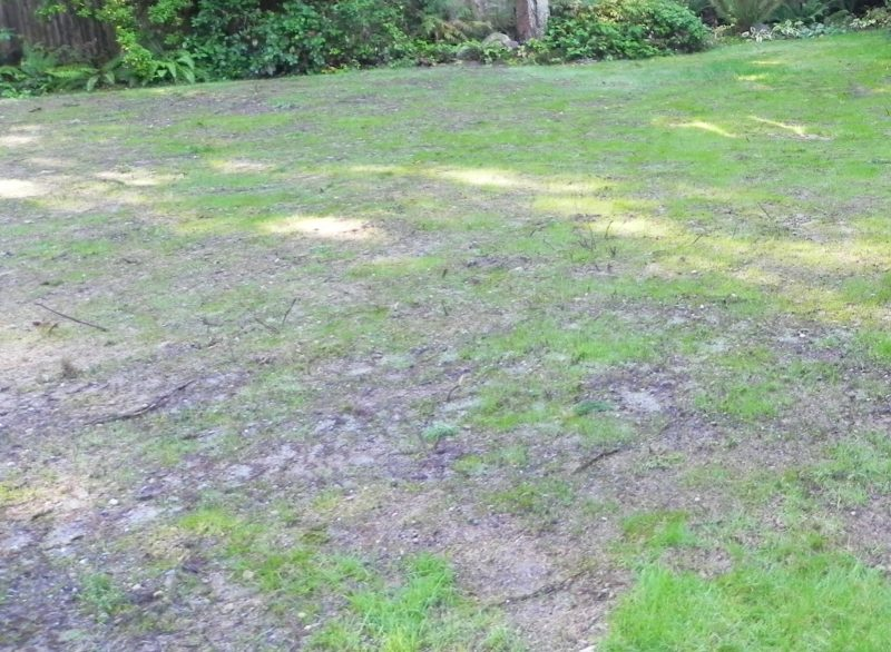 Common Lawn Problems You Will Encounter Jim S Mowing Nz