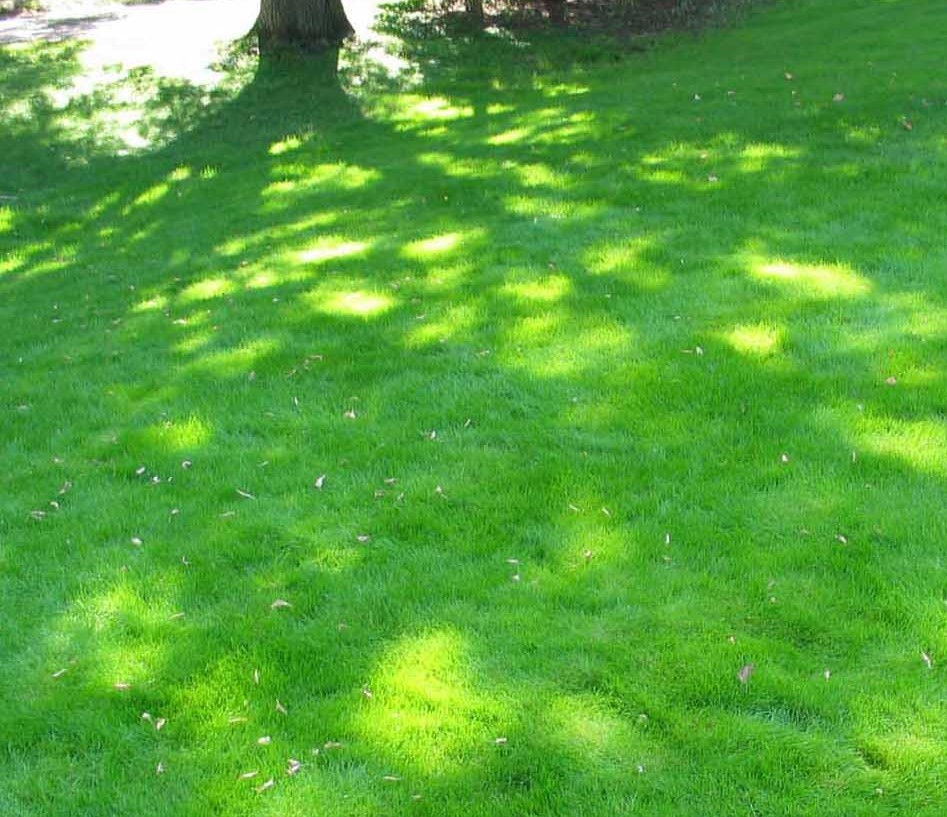 4 best grass species for shady gardens