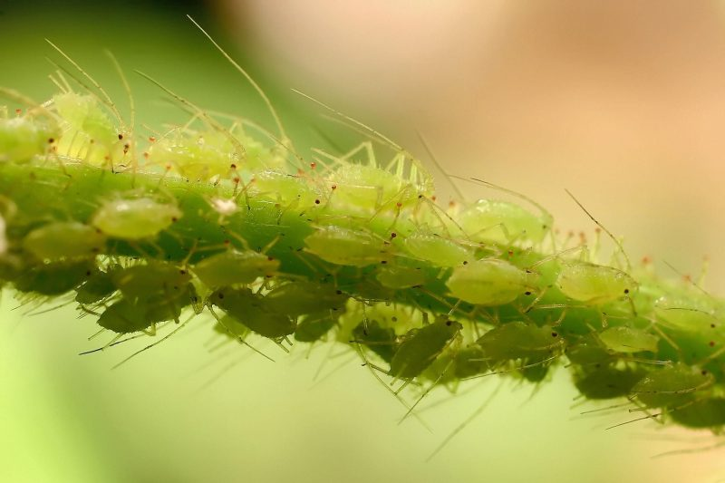 Most Common Garden Pests In Winter Jim S Mowing Nz