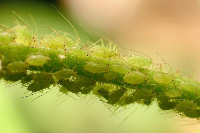 Most Common Garden Pests In Winter Jim S Mowing Nz