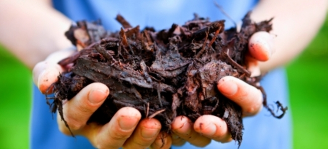 Learn The Basics Of Applying Mulch