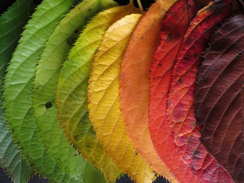 How To Put Autumn Leaves to Good Use