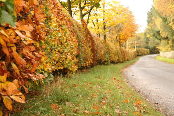 Care Tips For Your Hedge This Autumn