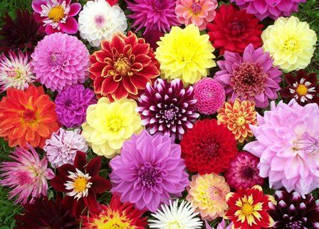 Seasonal Flower Guide For Aussie Gardeners