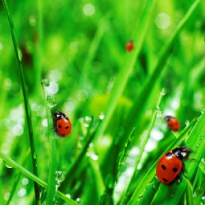 Beneficial Garden Pests