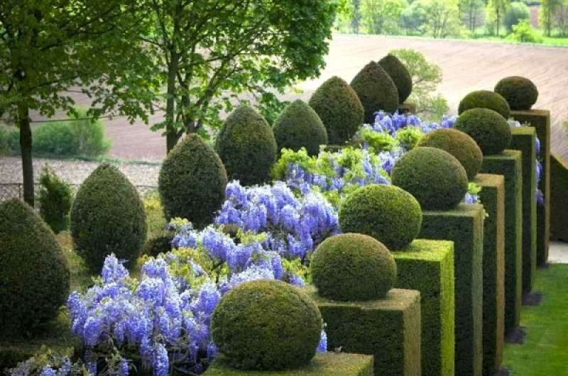 6 unique hedge design ideas for Garden design ideas with hedges