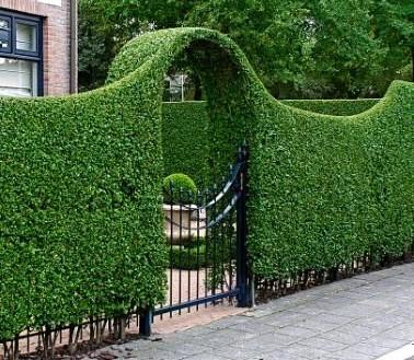 6 Unique Hedge Design Ideas - JimsMowing.com.au