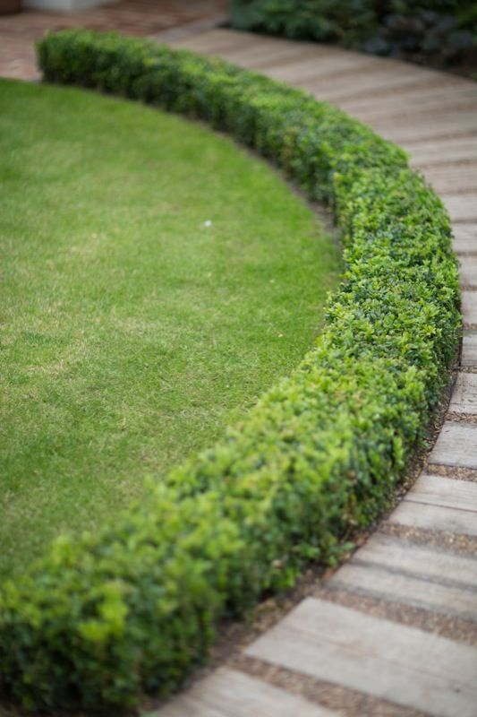 Enhance Your Garden With The Right Hedge Design Jimsmowing Com Au