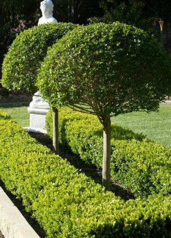 Enhance Your Garden With The Right Hedge Design