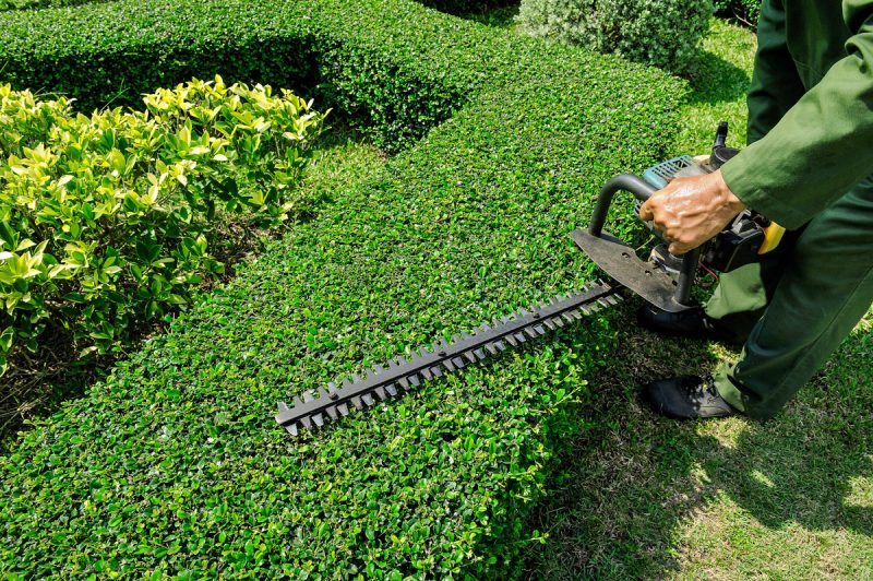 Choosing The Best Equipment For Hedging