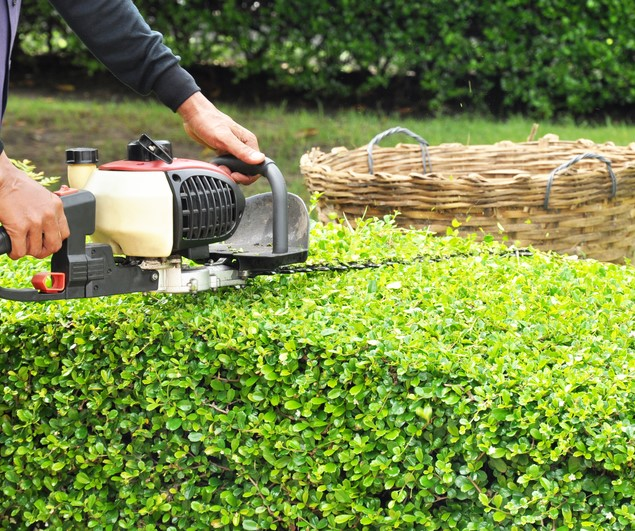 Hedge Trimming For Beginners Jimsmowing Com Au