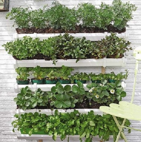 Herbs That Grow All Year Round