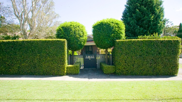 The Best Hedges To Boost Privacy