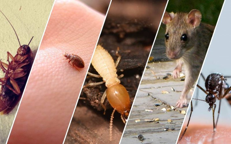 Common Summer Garden Pests