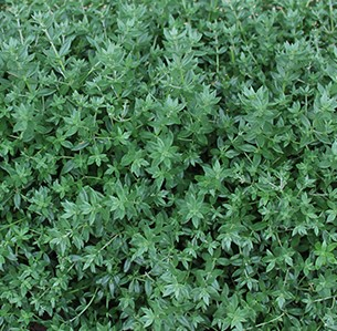 Best Australian Native Ground Cover for Slopes