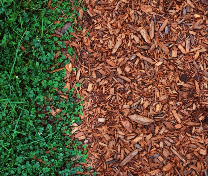 Best Mulch For Your Garden