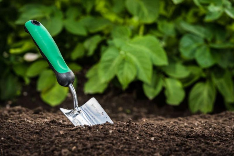 5 Tips Every Good Gardener Needs To Know