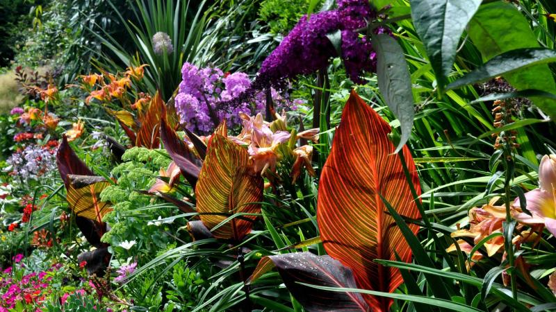 5 Secrets To Creating Spectacular Tropical Gardening