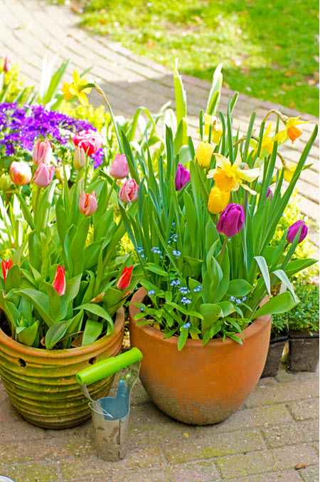 How to Plant a Patio Pot with Bulbs