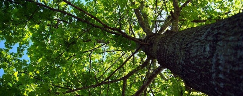 identifying dangerous branches to keep gardens safe