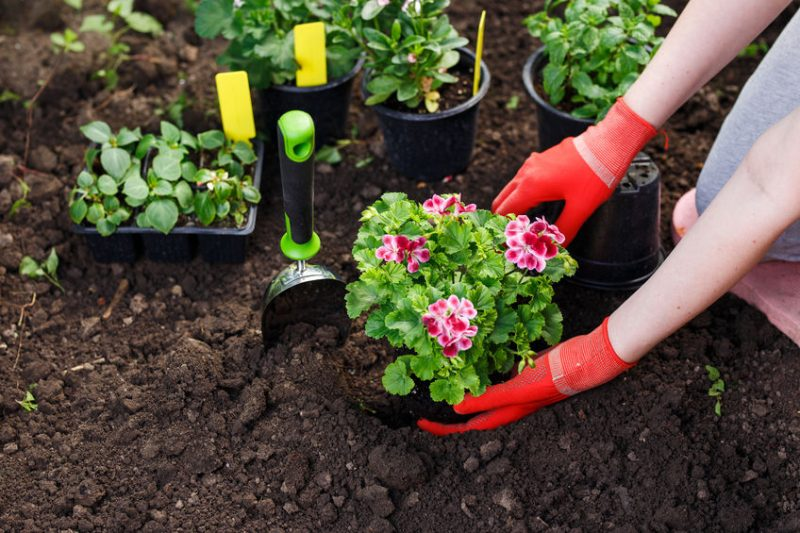 Planting flowering garden bed in time for spring blooms