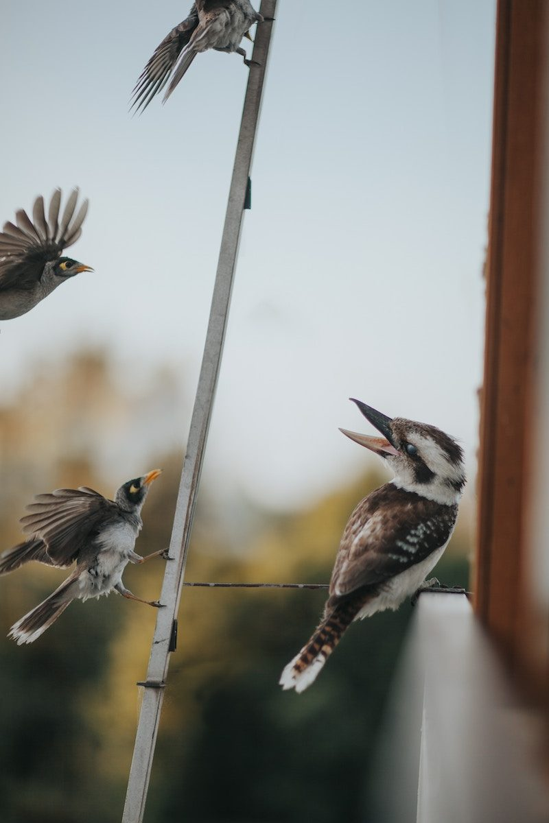 attract birds to the garden