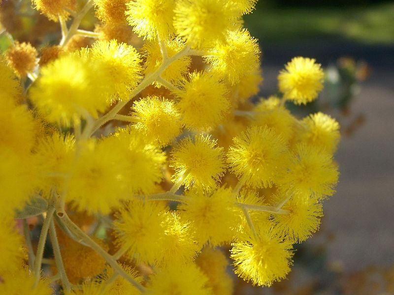 Australian Natives to Plant In Your Garden