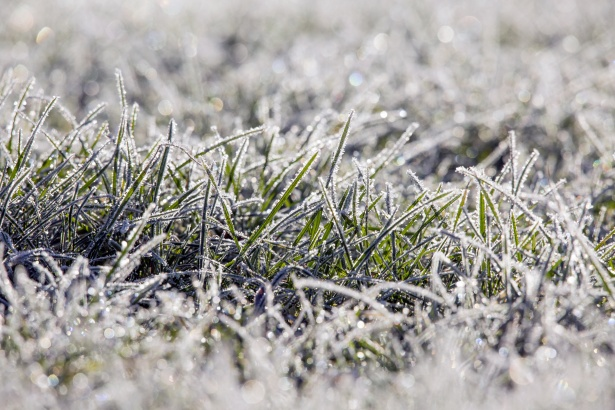 Preparing your lawn for the winter months