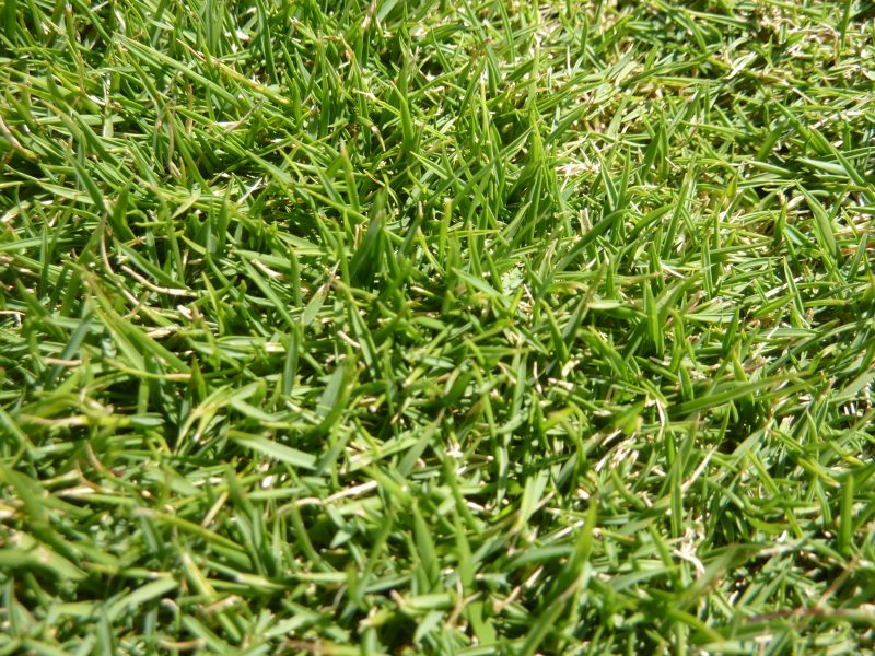 Popular Varieties of Lawn and How to Choose Which is Best For Your Garden