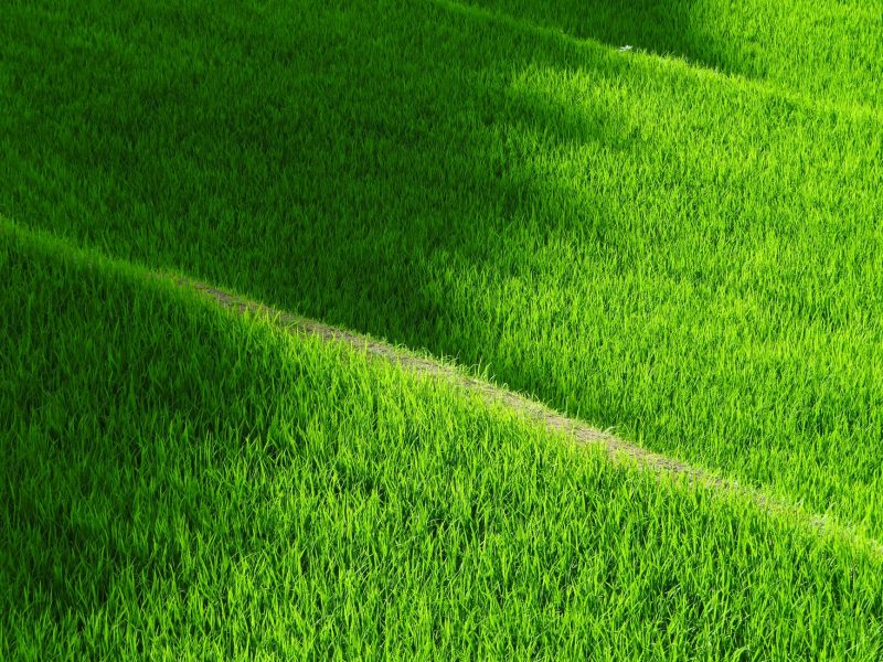 3 Lawns You Can Grow From Turf