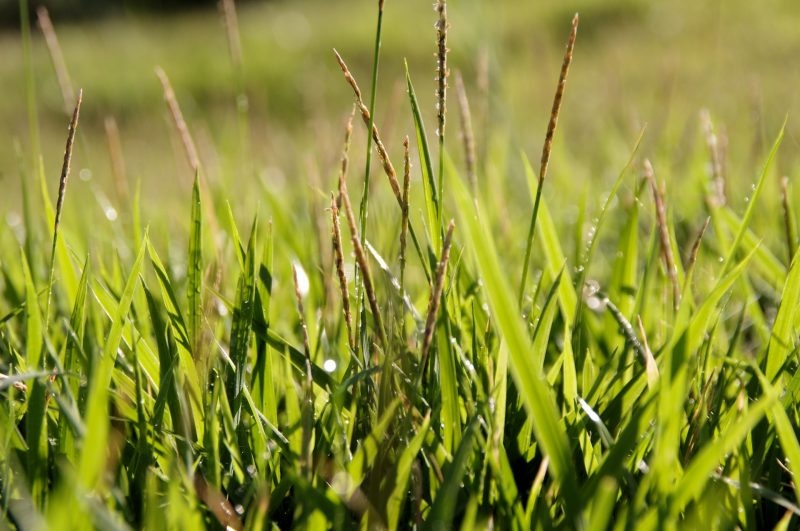 3 Lawns You Can Grow From Seed