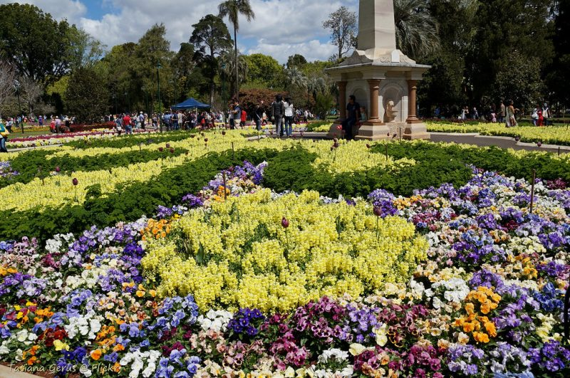 Plants Inspired by the Toowoomba Carnival of Flowers