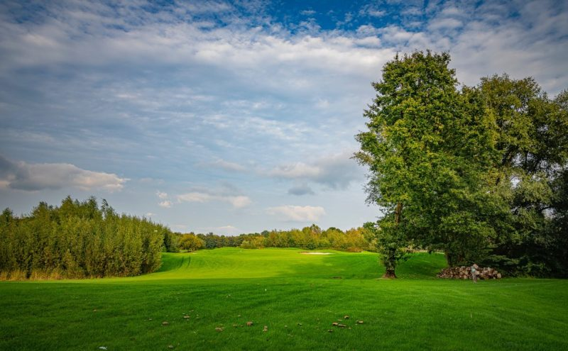 Different Types of Golf Course Grass