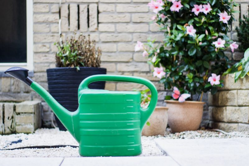 Top 10 Basic Gardening Tools for Beginners