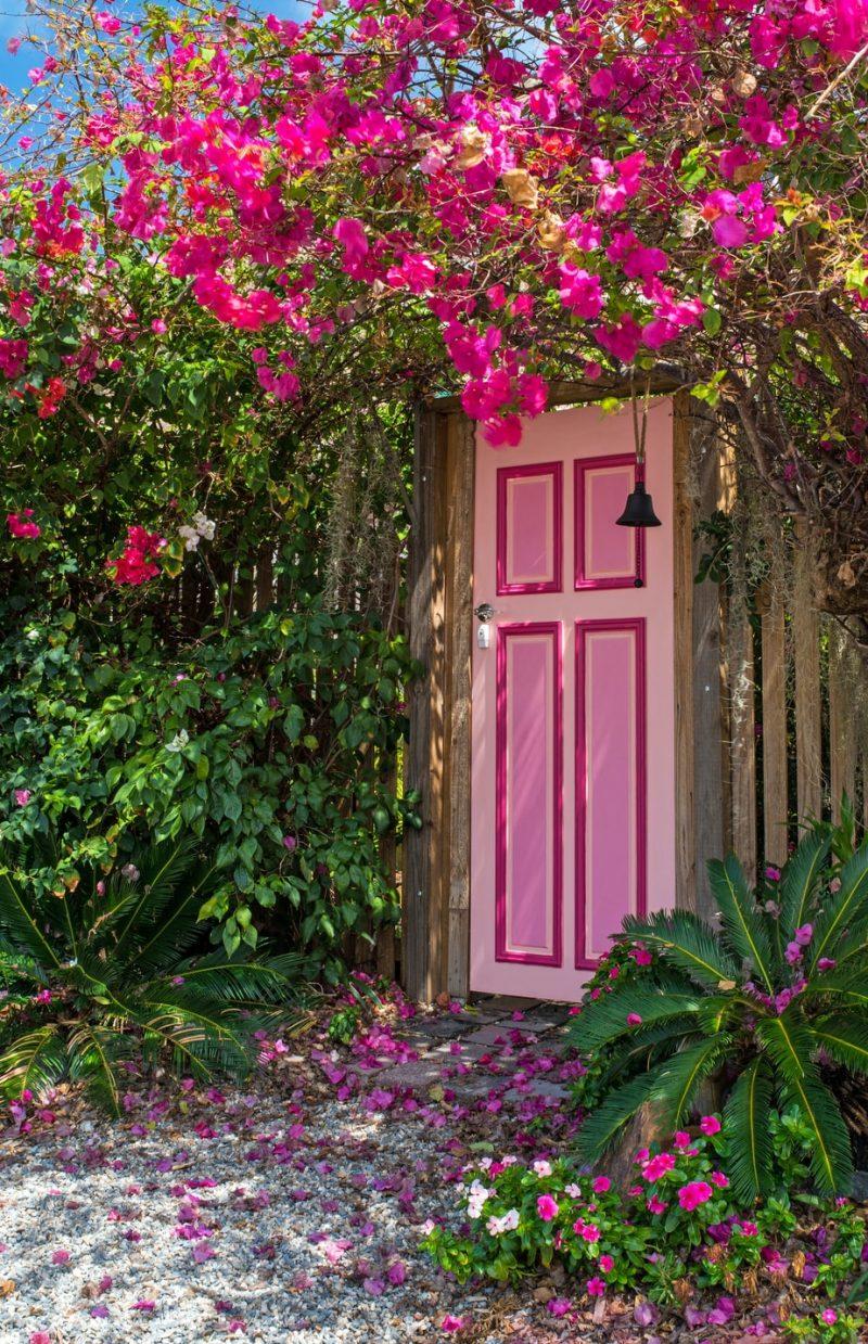 Bougainvillea growing above a pink doorway