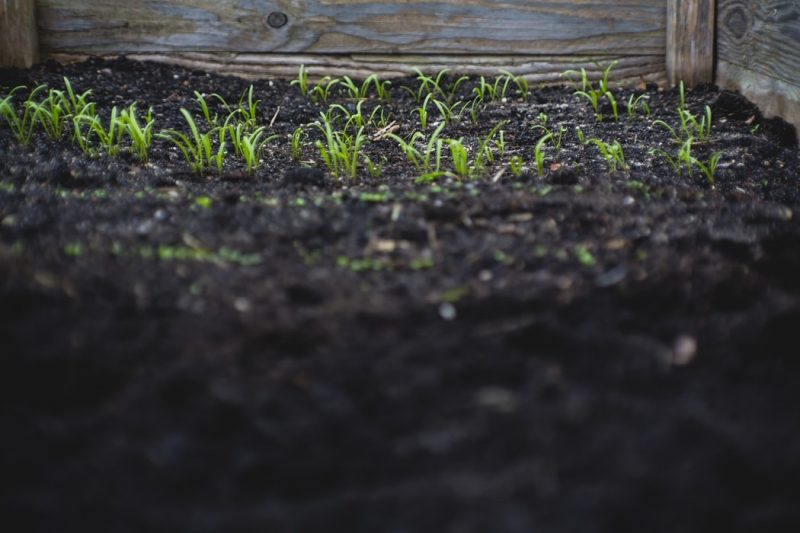 How to Improve Soil Quality