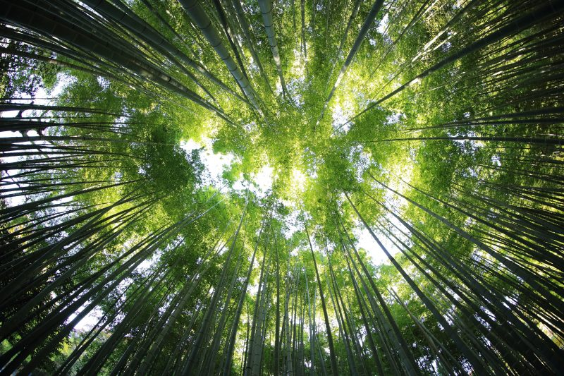 Types of Clumping Bamboo